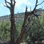 """Cedars"" by pierucciart"