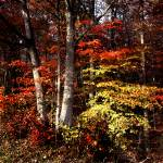 """""""pike state forest cameo modified"""" by RichardBaumer"""