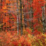 """""""fall color north chagrin preserve"""" by RichardBaumer"""