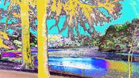 Trees in the Sunlight