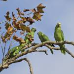 """Family"" by parrots"