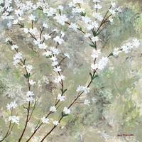 Pear Blossoms I