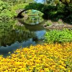 """""""The Pond"""" by karolsstuff"""