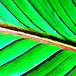"""Macro Leaf Abstract"" by waynelogan"