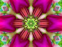 Fun Fuschia Flower Mandala 2