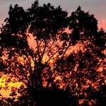 """""""A Blazing Sunset"""" by waynelogan"""
