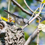 """Tufted Titmouse"" by WildAboutNaturePhotography"