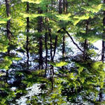 """Pond Reflections"" by waynelogan"