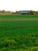 Idaho Alfalfa Field