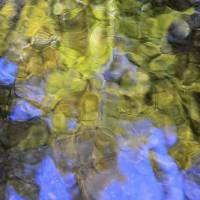 stream of consciousness by julie scholz