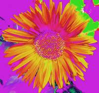 Yellow Psychedelic Flower