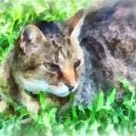 """Tabby Cat Closeup"" by susansartgallery"
