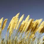 """""""Windy"""" by whitneybee"""