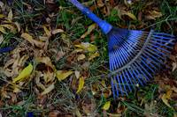 BLUE RAKE and LEAVES by Nawfal Johnson Nur