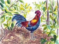 Key West Proud Rooster