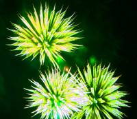 Fire Art Flowers Green