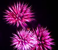 Fire Art Flowers Hot Pink