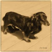 DOLLED UP DACHSHUND 2