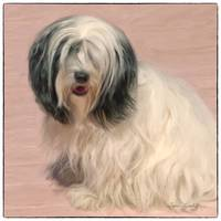LOVABLE LHASA