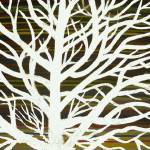 """white tree"" by TCRAWFORD"