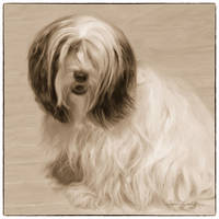LOVABLE LHASA 2