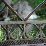 """Carolina Wren in Gazebo"" by TealWingPhotography"
