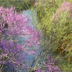 """""""Oklahoma Spring"""" by anniepics"""