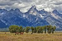 Teton Mountains and Horses