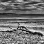 """""""Driftwood"""" by StevePurnell"""