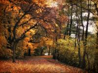 Golden Carpet