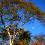 """moonrise over desert"" by Retrograph"