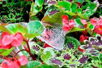 Spider Web in Flowers