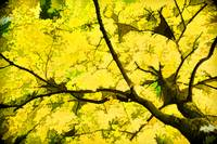 Bold Yellow of Autumn