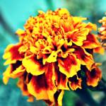 """Color Explosion"" by ElisaPhotographer"