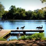 """Goose Dock"" by flowerchild6482"