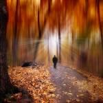"""""""Wondrous Woodland"""" by JessicaJenney"""