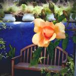 """""""Rose with Blue Wall and Bench"""" by Kirby"""