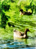Ducks on a Tranquil Pond