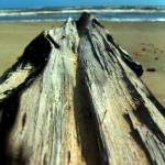 """DRIFTWOOD"" by tmckinleyphotography"