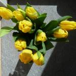 """yellow tulips"" by baato"