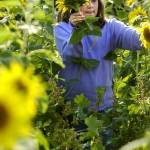 """PICKING SUNFLOWERS"" by tmckinleyphotography"