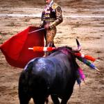 """BULLFIGHTER"" by tmckinleyphotography"