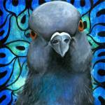 """Pigeon Portrait no. 1"" by joseygrosey"