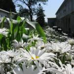 """Backyard Garden"" by YouthinFocus"