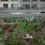 """""""Community Garden"""" by YouthinFocus"""