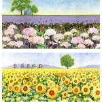 """hydrangea sunflowers"" by studiobythesound"