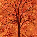 """Original Autumn Tree"" by LimeCreekArt"