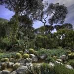 """The Cactus Garden"" by manateevoyager"