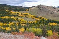 Colorado Autumn Aspens Colors