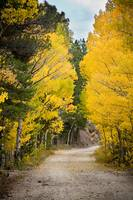 Colorado Rocky Mountain Aspen Road Portrait